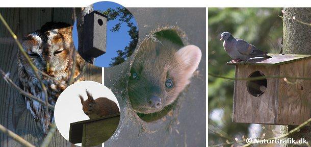 Mange fuglearter, herunder natuglen og hulduen bruger gerne redekasser. Også måren kan finde på flytte ind i en redekasser - typisk en større kasse bygget til ugler. Af og til bruger egernet også en redekasse som opholdssted.