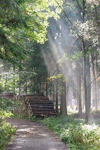 Dansle skove binder luftens co2 og bidrager til at formindske